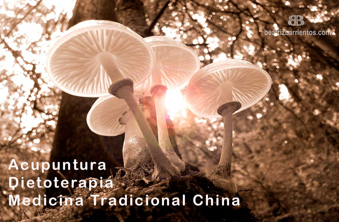 Otoño en Medicina Tradicional China